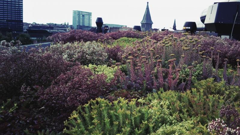 Grønne tage er smukke og er med til at klimasikre byerne