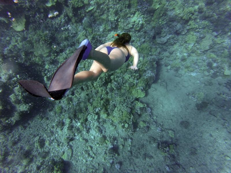 Svømmefødder og andet vigtigt udstyr til en snorkeltur