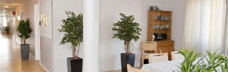 Kunstigeplanter.dk - kunstige planter til private og virksomheder